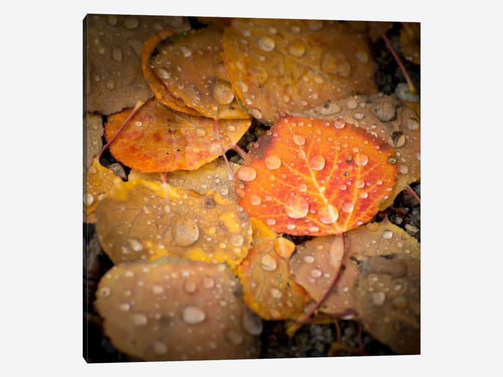 Fall Rains #2 by Dan Ballard 1-piece Canvas Print