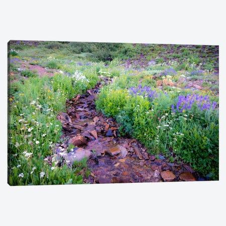 Field of Beauty l Canvas Print #11572} by Dan Ballard Canvas Print