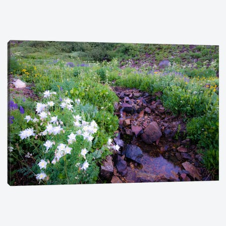 Field of Beauty 2 Canvas Print #11575} by Dan Ballard Canvas Artwork