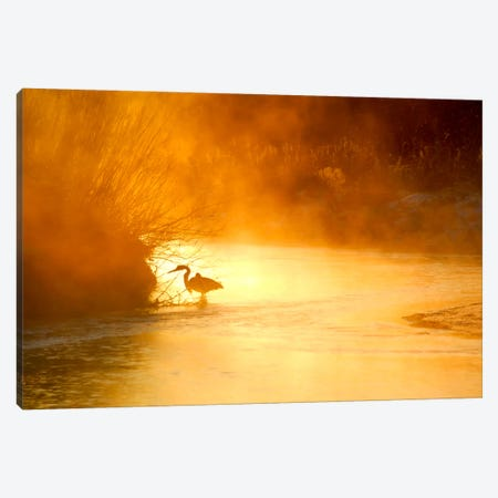 Glowing Mist Canvas Print #11576} by Dan Ballard Canvas Wall Art