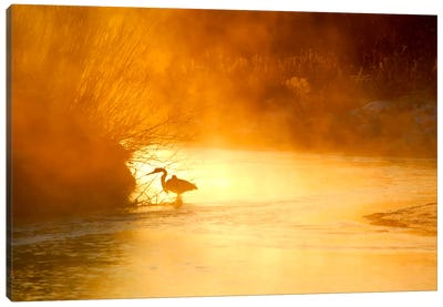 Glowing Mist Canvas Print #11576