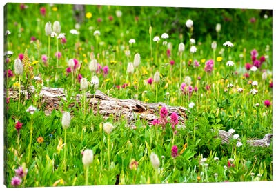 Meadow of Color Canvas Art Print