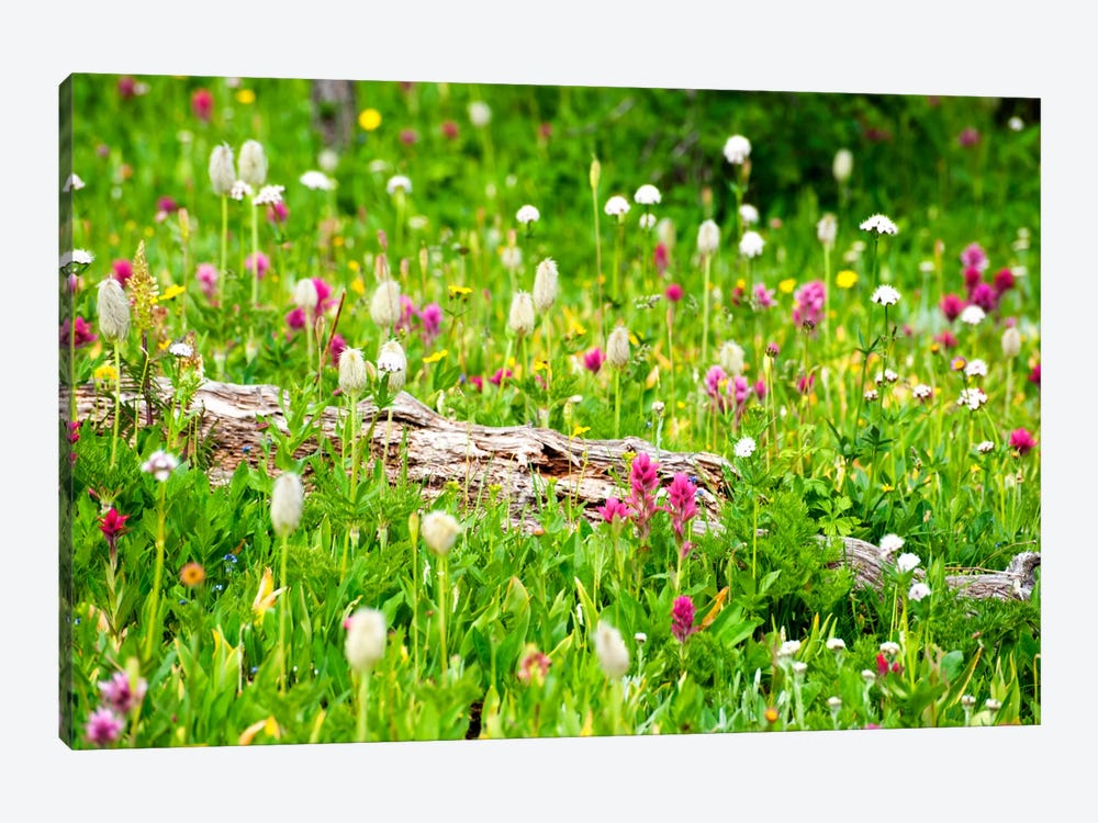 Meadow of Color 1-piece Canvas Art