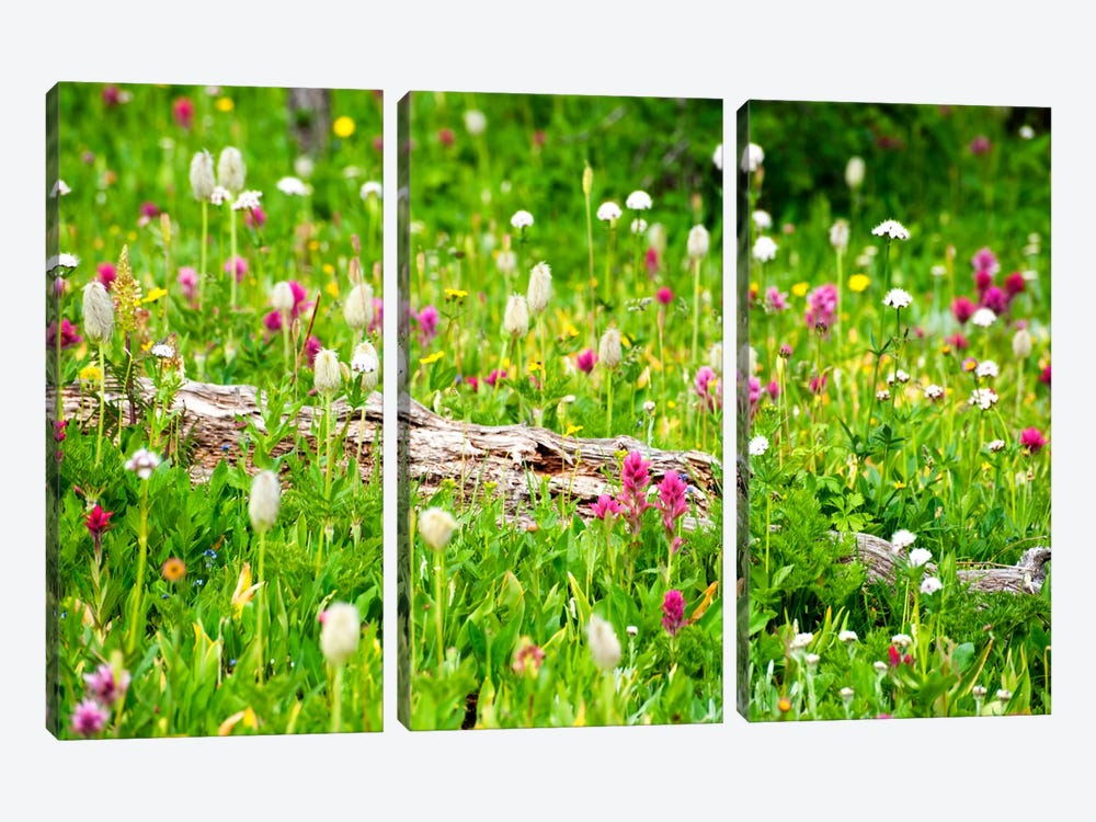 Meadow of Color by Dan Ballard 3-piece Canvas Wall Art
