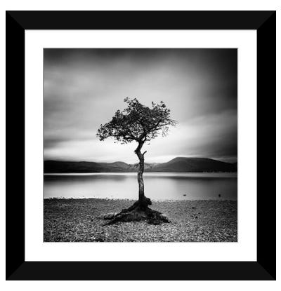 Millarrochy Tree Framed Art Print