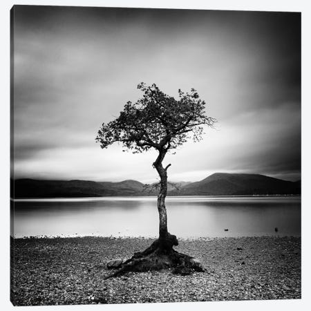 Millarrochy Tree Canvas Print #11636} by Nina Papiorek Art Print