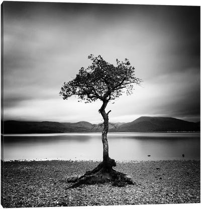 Millarrochy Tree Canvas Art Print