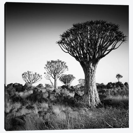 Namibia Quiver Trees Canvas Print #11637} by Nina Papiorek Art Print