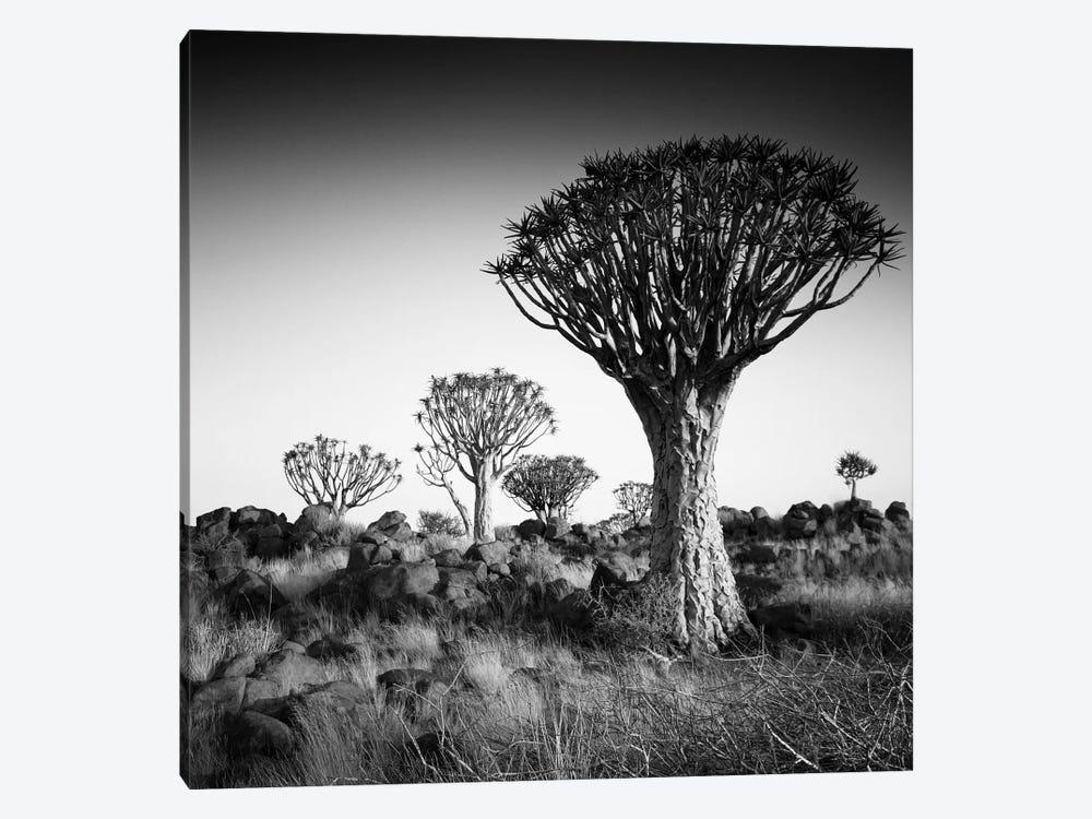 Namibia Quiver Trees by Nina Papiorek 1-piece Canvas Artwork