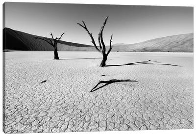 Namibia Dead Vlei Canvas Print #11639