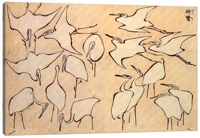 Cranes Canvas Print #1181