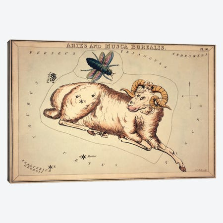 Aries and Musca Borealis, 1825 Canvas Print #13415} by Sidney Hall Canvas Art