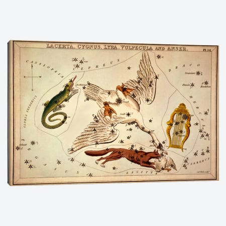 Lacerta, Cygnus, Lyra, Vulpecula and Anser Canvas Print #13430} by Sidney Hall Canvas Print