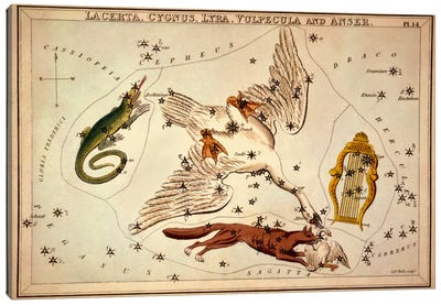 Lacerta, Cygnus, Lyra, Vulpecula and Anser Canvas Art Print