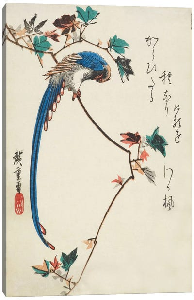 Blue Magpie On Maple Branch Canvas Art Print