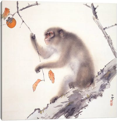 Monkey Canvas Art Print