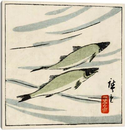 Ayu zu (River Trout) Canvas Art Print