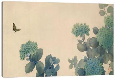 Hydrangeas Canvas Print #13684