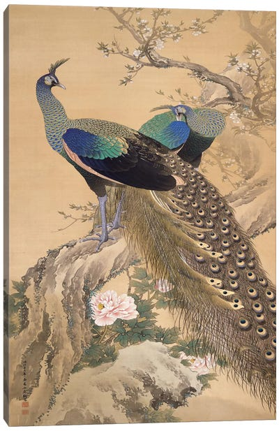 A Pair of Peacocks in Spring by Imao Keinen Canvas Art Print