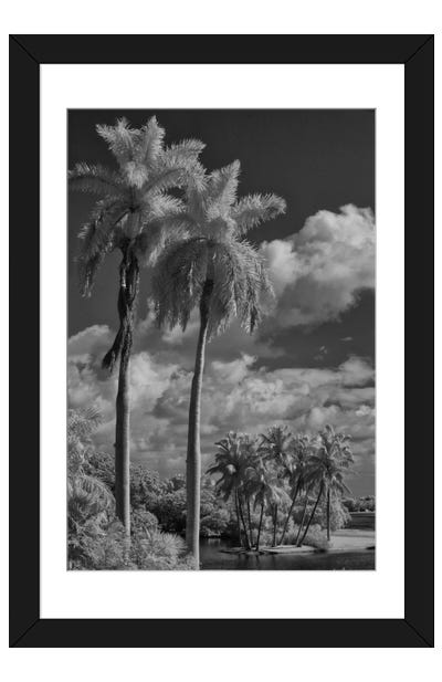 Eleven Palms Framed Art Print