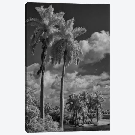 Eleven Palms Canvas Print #13878} by Geoffrey Ansel Agrons Canvas Art Print