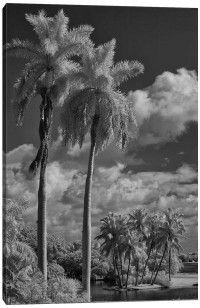 Eleven Palms Canvas Art Print
