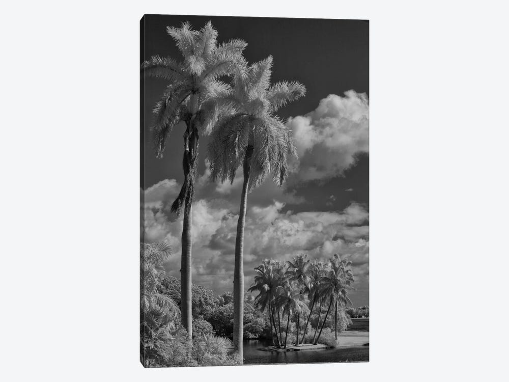 Eleven Palms 1-piece Canvas Wall Art