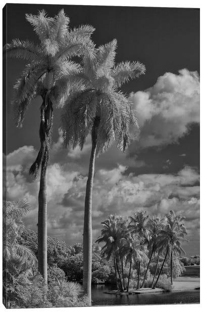 Eleven Palms Canvas Art Print