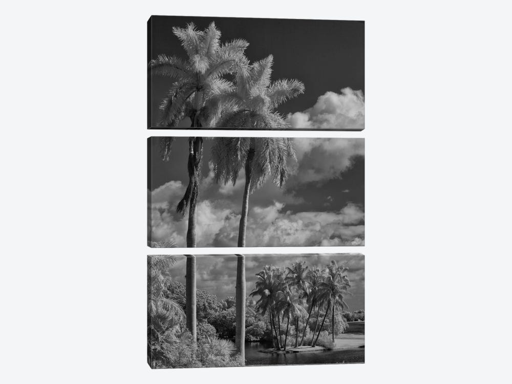 Eleven Palms by Geoffrey Ansel Agrons 3-piece Canvas Art