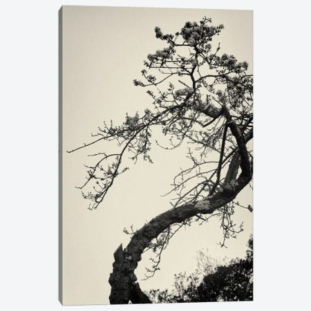 Winter Plum Canvas Print #13900} by Geoffrey Ansel Agrons Canvas Print