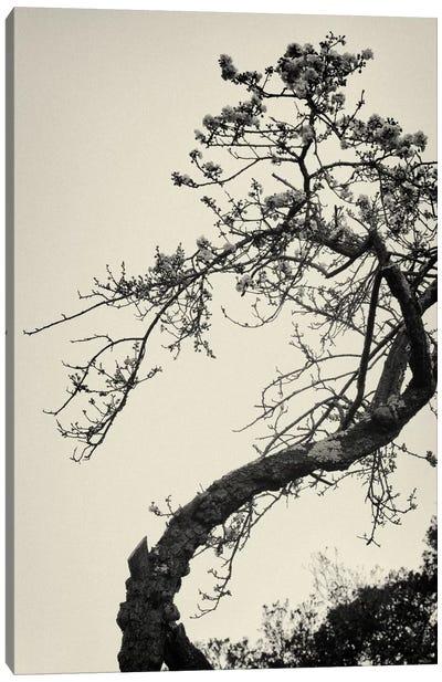 Winter Plum Canvas Print #13900