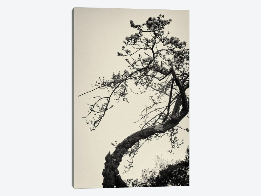 Winter Plum by Geoffrey Ansel Agrons 1-piece Canvas Wall Art