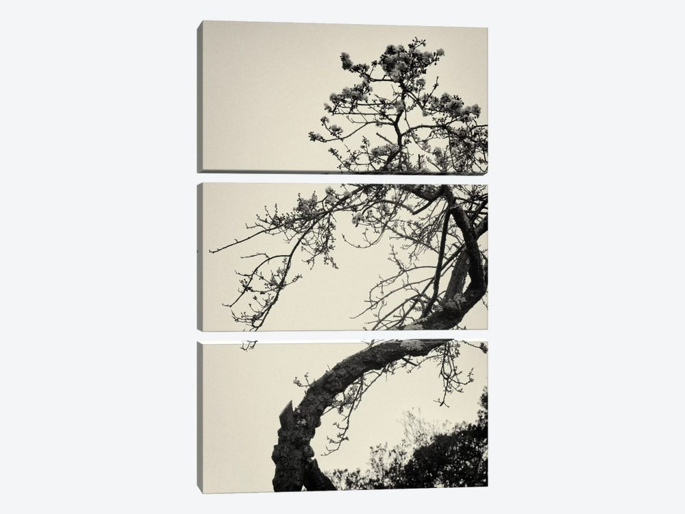 Winter Plum by Geoffrey Ansel Agrons 3-piece Canvas Wall Art