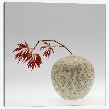 New Chinese Maple Canvas Print #13906} by Geoffrey Ansel Agrons Canvas Wall Art