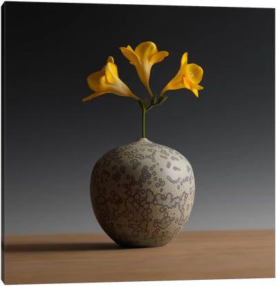 Three Freesia Blossoms Canvas Art Print