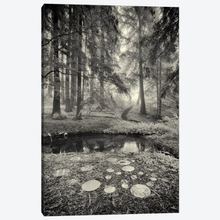 Specular Echoes Canvas Print #13932} by Geoffrey Ansel Agrons Canvas Art