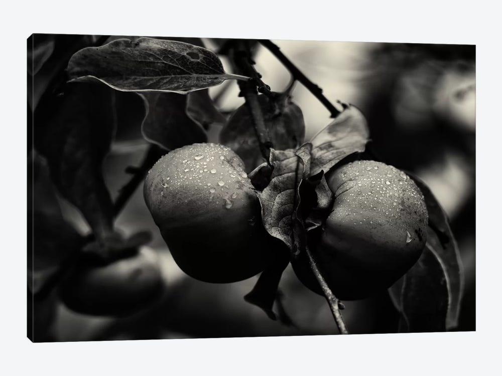 Three Persimmons in the Rain by Geoffrey Ansel Agrons 1-piece Canvas Art