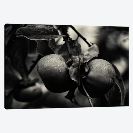 Three Persimmons in the Rain Canvas Print #13933} by Geoffrey Ansel Agrons Canvas Artwork