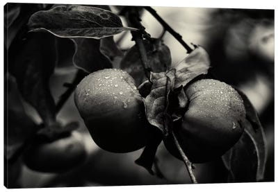 Three Persimmons in the Rain Canvas Art Print