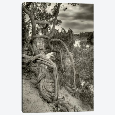 Gorgon Canvas Print #13940} by Geoffrey Ansel Agrons Canvas Print