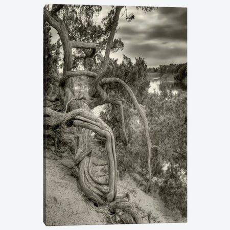 Gorgon Canvas Print #13940} by Geoffrey Ansel Agrons Canvas Print