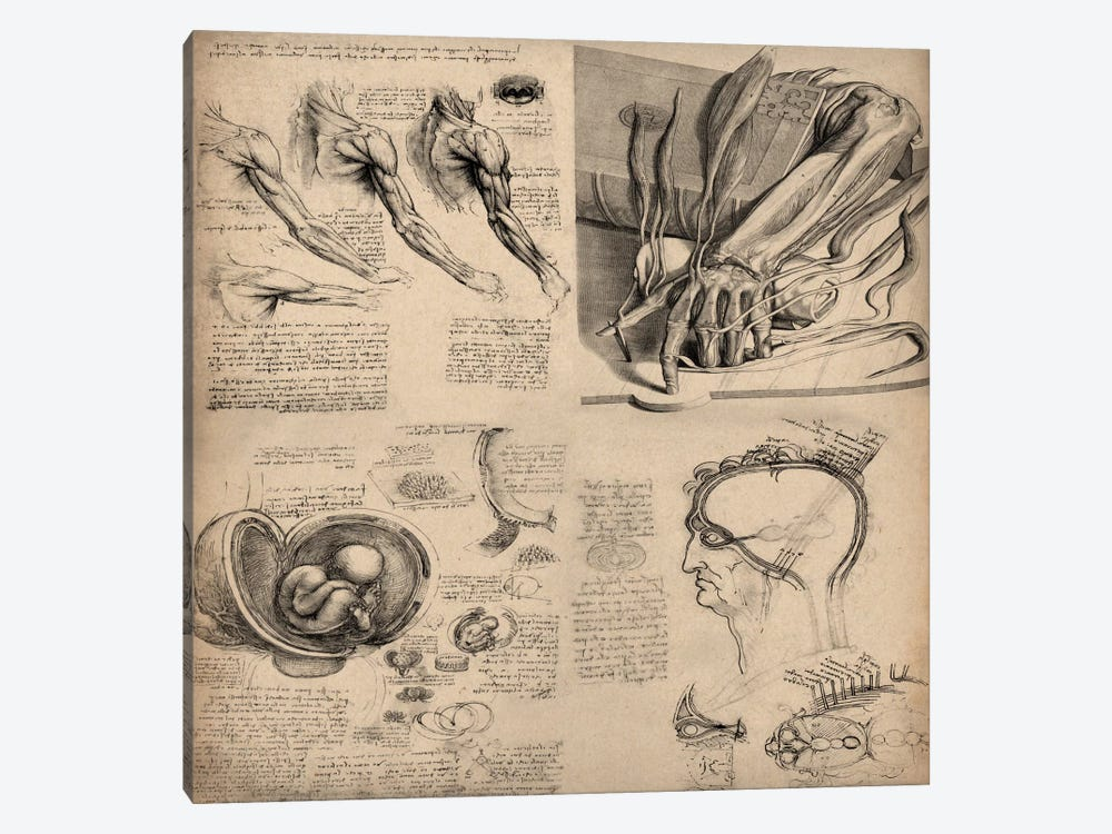 Human Body Anatomy Collage by Leonardo da Vinci 1-piece Canvas Wall Art