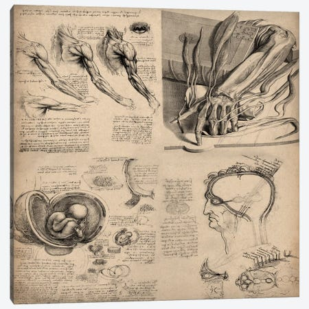 Human Body Anatomy Collage Canvas Print #13953} by Leonardo da Vinci Canvas Wall Art