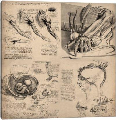 Human Body Anatomy Collage Canvas Art Print