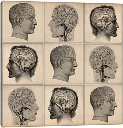 Human Head Anatomy Collage Canvas Art Print