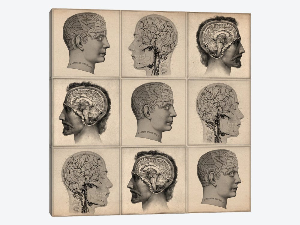 Human Head Anatomy Collage 1-piece Art Print