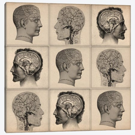 Human Head Anatomy Collage Canvas Print #13954} by Unknown Artist Art Print