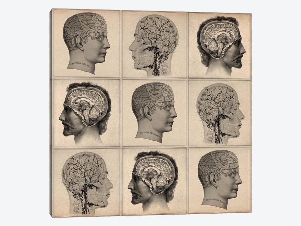 Human Head Anatomy Collage by Unknown Artist 1-piece Art Print