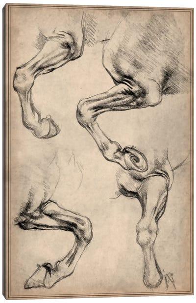 Leonardo's Horse Canvas Print #13957