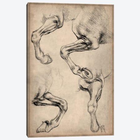 Leonardo's Horse Canvas Print #13957} by Leonardo da Vinci Art Print